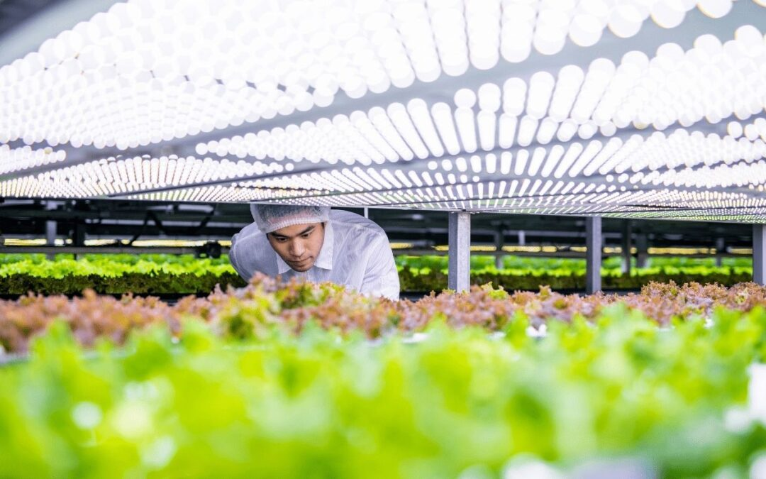 How to set up a Agritech company in the UAE?